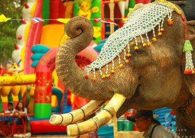 elephant-ceremony-decoration-weeding