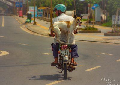 road-dog-motorbike-passenger-drive
