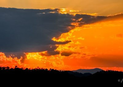 sunset-cloud-fire-animal-unsane