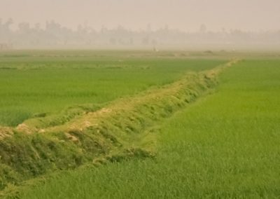 tradition-agriculture-rice-plantation-worker-mist