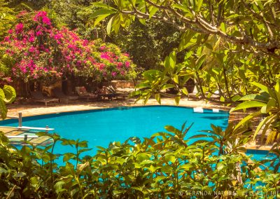 swimming-pool-trees-veranda-kep