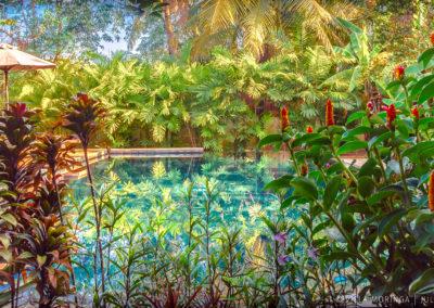 garden-swimming-flower-villa-cambodia